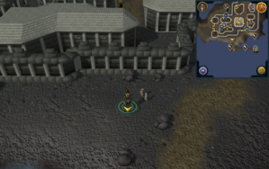 Scan clue Fremennik Isles south of town wall.png