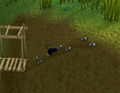 Ape Atoll Agility Course (Skull slope).png