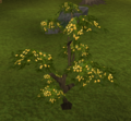 Neverberry bush.png