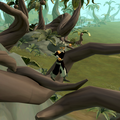 Anachronia Agility Course cave entrance roots.png