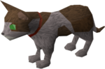 Pet kitten (white and brown) pet.png