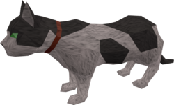 Overgrown cat (white and black) pet.png