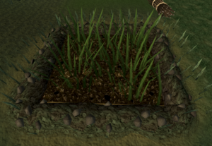 Mushroom patch (weeds).png