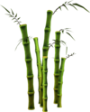 Bamboo (tree).png
