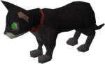 Pet kitten (black) pet.png