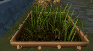 Evil turnip patch (weeds).png