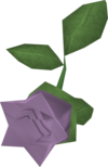 Cave nightshade detail.png