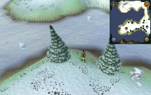 Scan clue Fremennik Isles north between two arctic pines on south-west snowy island.png