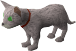 Pet kitten (white) pet.png