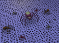 Spider court 1.png