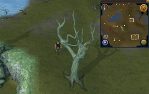 Compass clue Lumbridge east of water altar.png