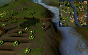 Compass clue Lumbridge north of Farmer Fred's farm.png