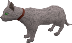 Pet cat (white) pet.png