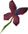 Red vine blossom detail.png