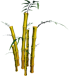 Golden Bamboo (tree).png