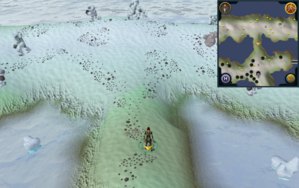 Scan clue Fremennik Isles land bridge connecting two snowy islands.png