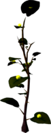 Exuberry bush.png