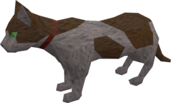 Pet cat (white and brown) pet.png