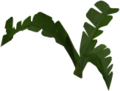 Fern (small plant).png