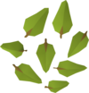 Leaves detail.png
