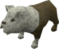 Bulldog puppy (white) pet.png